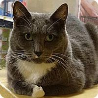 Adopt A Pet :: TINKER - Diamond Bar, CA