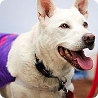 Adopt A Pet :: Skye - Loveland, CO