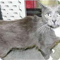 Adopt A Pet :: Aslan - Greenville, SC