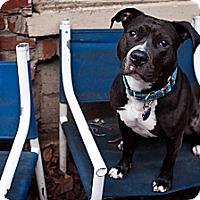 Adopt A Pet :: Lady Bug - Clarksburg, MD