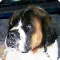 Adopt A Pet :: KING - Glendale, AZ