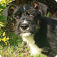 Adopt A Pet :: Hudson - Somers, CT
