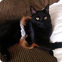 Adopt A Pet :: Oakley - Alexandria, VA