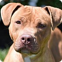Adopt A Pet :: Nova - Des Peres, MO