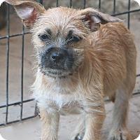 Adopt A Pet :: Taco Bell - Norwalk, CT