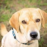 Adopt A Pet :: Fasso - Navarre, FL