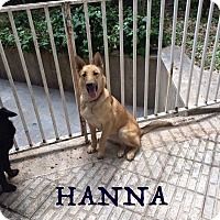 Adopt A Pet :: Hanna * Adoption Pending* - Guelph, ON