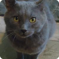 Adopt A Pet :: Homer - Vancouver, BC