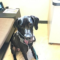 Adopt A Pet :: Ruby - Wilmington, DE