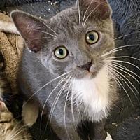 Adopt A Pet :: Normandy - St. Louis, MO