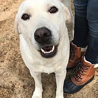 Adopt A Pet :: Swizzle - West Columbia, SC