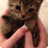 Adopt A Pet :: Novalee - Aiken, SC
