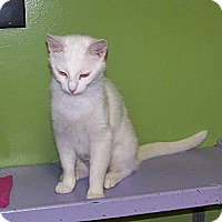 Adopt A Pet :: Perrie - Dover, OH