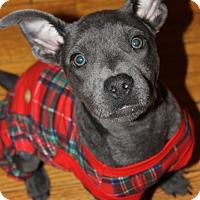 Adopt A Pet :: Faith - Chicago, IL