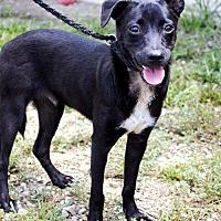 Adopt A Pet :: Ruger K91-7774 - Thibodaux, LA