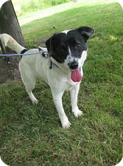 Terrier (Unknown Type, Small) Mix Dog for adoption in Hamilton, Ontario - Dash