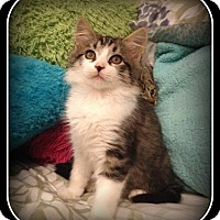 Adopt A Pet :: Arnee - What a Sweetie! - South Plainfield, NJ