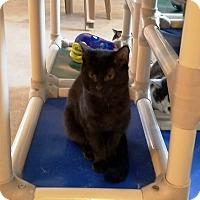 Adopt A Pet :: Denver - Geneseo, IL