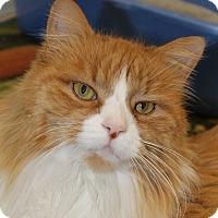 Adopt A Pet :: Puff Daddy - North Branford, CT