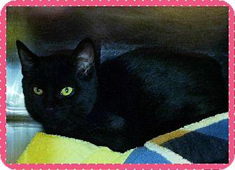 Domestic Shorthair Kitten for adoption in Marietta, Georgia - ANN (R)