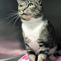 Adopt A Pet :: Eve - Paris, ME