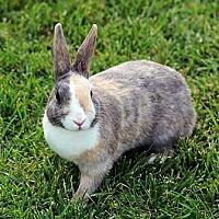Adopt A Pet :: Trixie - Tustin, CA