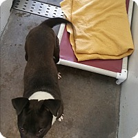 Adopt A Pet :: Rudy - Chippewa Falls, WI