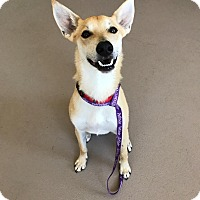 Adopt A Pet :: Ted *FOSTER* - Appleton, WI