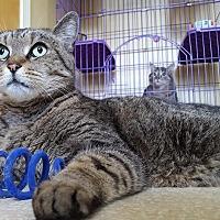 Adopt A Pet :: January - Salisbury, MA