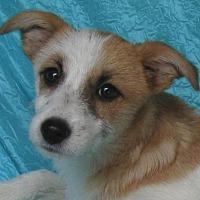 Adopt A Pet :: Libby Scott - Cuba, NY