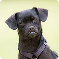 Adopt A Pet :: CHELSEA - Corona, CA
