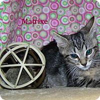 Adopt A Pet :: Matrixe - Miami Shores, FL