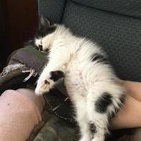 Adopt A Pet :: Mina - Santa Cruz, CA