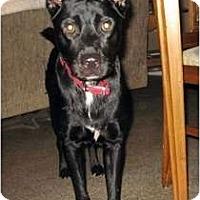 Adopt A Pet :: Jake - Orlando, FL