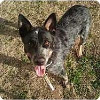 Adopt A Pet :: Coco - Arlington, TX