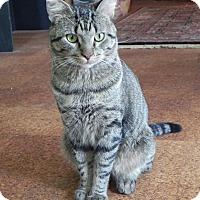 Adopt A Pet :: Gambler - Chicago, IL