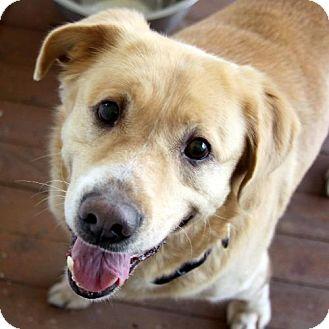 Labrador Retriever Mix Dog for adoption in Winder, Georgia - Petey