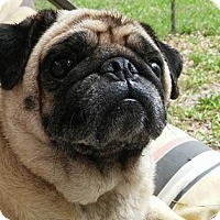 Adopt A Pet :: Abby - Green Cove Springs, FL