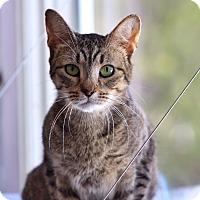 Adopt A Pet :: Sierra - Wayne, NJ