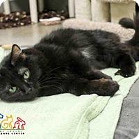 Adopt A Pet :: WINNIFRED - Irvine, CA
