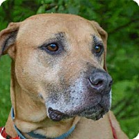 Adopt A Pet :: JOHN ADAMS - Pittsburgh, PA