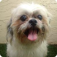 Adopt A Pet :: Barkley - Ft. Lauderdale, FL
