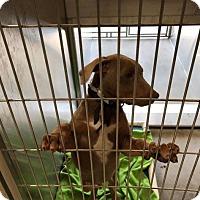 Adopt A Pet :: Jonathan - Sun Valley, CA