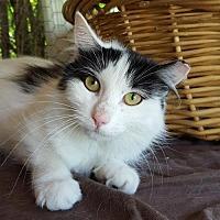 Adopt A Pet :: Miss Pretty - Fishkill, NY