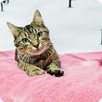 Adopt A Pet :: Kayla - Walton County, GA