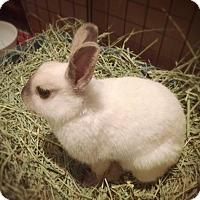 Adopt A Pet :: Gwyenevere - Los Angeles, CA