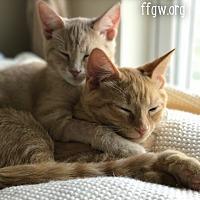Adopt A Pet :: Kennedy - Merrifield, VA