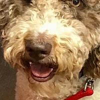 Adopt A Pet :: Lottie - LaGrange, KY