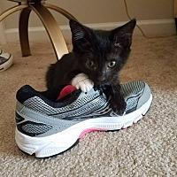 Adopt A Pet :: EMBER - Burlington, NC