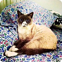 Adopt A Pet :: Otis - Bentonville, AR